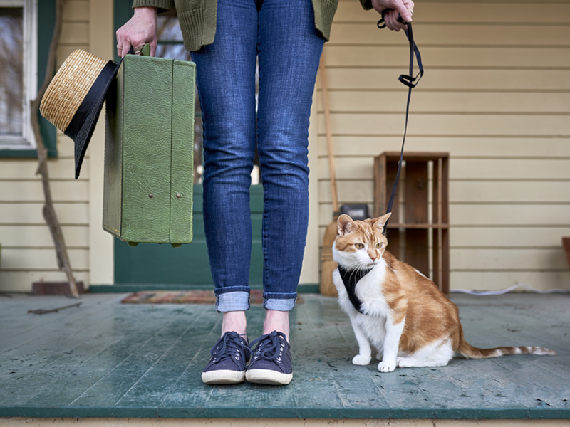 Alt-Tags: Urlaub Haustier, Verreisen Foto: goodmanphoto/fotolia.com