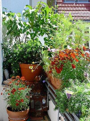 Balkon, Balkongeländer, Pflanzfläche, Foto: balkonsaison.de