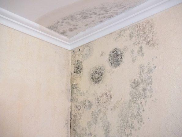 Gebäudeversicherung, Wasserschaden an Wand, Foto: Gundolf Renze/fotolia.com