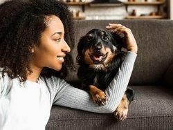 Haustiere in der Mietwohnung, Foto einer jungen Frau mit ihrem Hund auf einem Sofa, Foto: Pixel-Shot / stock.adobe.com
