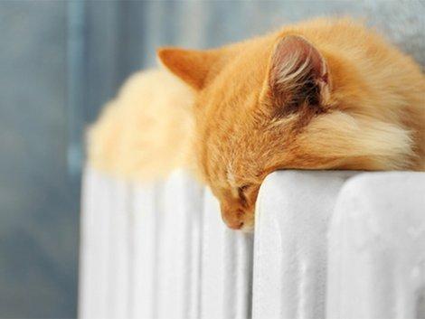 Heizkosten, Katze auf Heizung, Verjährungsfristen, Foto: Africa Studio/fotolia.com