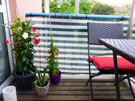 Kletterpflanzen, Balkonespannung, Sichtschutz, Foto: Katharina Richterstetter