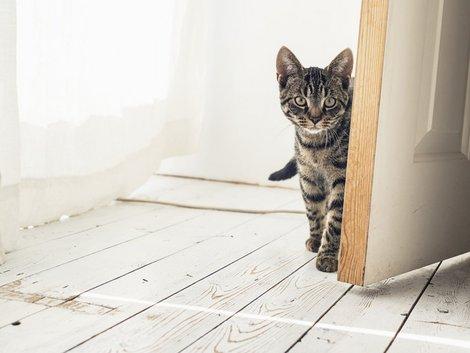 Haustiere, Foto: ysbrandcosijn/ fotolia.com