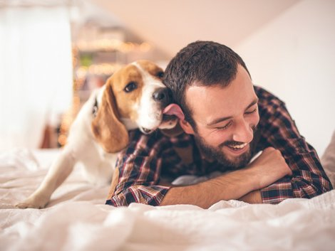 Haustiere, Beagle, Hund, Foto: iStock/ AleksandarNakic