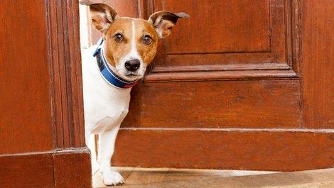 Hund guckt aus Fenster, Einbruchschutz, Wachhund, Foto: Javier brosch / stock.adobe.com